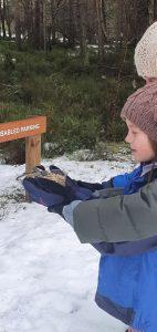 Loch Garten, Bird Feeding, What to do